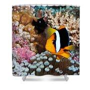 Turning Nemo Shower Curtain