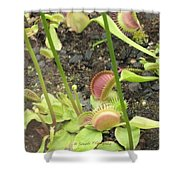 Nepenthes Shower Curtain