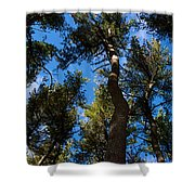 Nests Shower Curtain