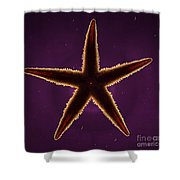 Netted Sea Star Shower Curtain