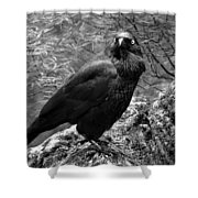 Nevermore - Black And White Shower Curtain