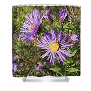 New England Aster Wildflower - Purple Shower Curtain