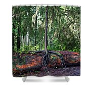 New Growth Shower Curtain by Anthony Jones