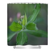 New Growth Shower Curtain