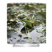 New Hampshire Frog Shower Curtain