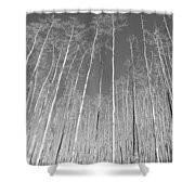New Mexico Series - Leaf Free Black And White Shower Curtain