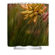 New Pines Cones In Spring  Shower Curtain