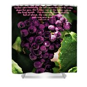 New Wine And Oil Shower Curtain