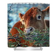 New Years Morning Cow Shower Curtain