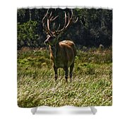 New Zealand Elk Shower Curtain