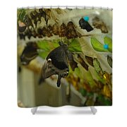 Newborn At The Butterfly Factory  Shower Curtain