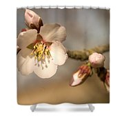 Newly Formed Buds And Flowers Bloom Shower Curtain