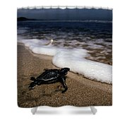 Newly Hatched Leatherback Turtle Shower Curtain
