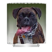 Nice Doggy Shower Curtain