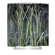 Night Walk Through The High Grass Shower Curtain