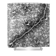 Nipah Virus Shower Curtain by Science Source