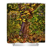 Nisqually Wildlife Refuge P12 The Maple Tree Shower Curtain