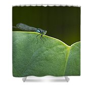Non Distressed Damsel Shower Curtain