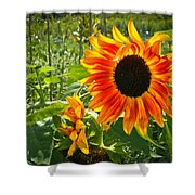 Noontime Sunflowers Shower Curtain