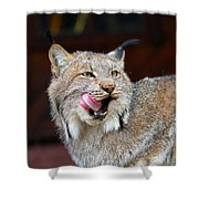 North American Lynx Shower Curtain