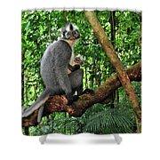 North Sumatran Leaf Monkey Presbytis Shower Curtain