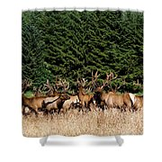 Northcoast Elk Along The 101 Shower Curtain