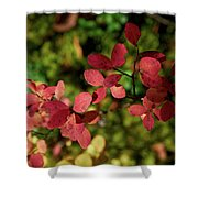 Northern Bilberry Shower Curtain
