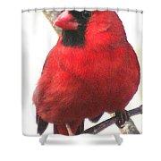 Northern Cardinal Closeup Shower Curtain