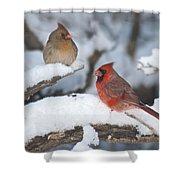 Northern Cardinal Pair 4284 2 Shower Curtain