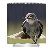 Northern Mockingbird - Lunch Is On The Way Shower Curtain