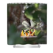 Northern Mockingbird - With Babies Shower Curtain