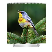 Northern Parula Parula Americana Male Shower Curtain