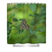 Northern Pearly Eye Butterfly Shower Curtain