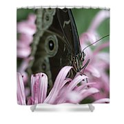 Northern Pearly-eye On Pink Shower Curtain