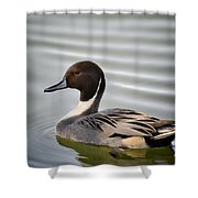 Northern Pintail Duck  Shower Curtain