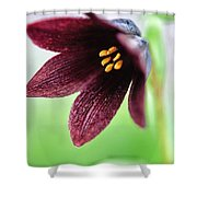 Northern Rice Root Fritillaria Shower Curtain