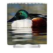 Northern Shoveler Anas Clypeata Male Shower Curtain