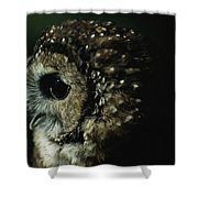Northern Spotted Owl Strix Occidentalis Shower Curtain