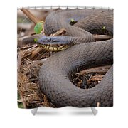 Northern Water Snake  Shower Curtain