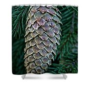 Norway Spruce Cone Shower Curtain