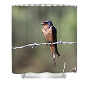 Not A Worry Shower Curtain