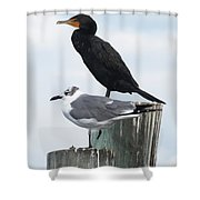 Not Birds Of A Feather Shower Curtain