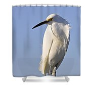 Not Ruffled Shower Curtain