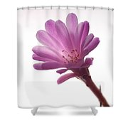 Notocactus Herderii Flower Shower Curtain