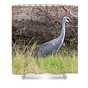 November Sandhill Crane Shower Curtain
