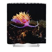 Nudibranch Brightly Colored Arctic Ocean Shower Curtain by Flip Nicklin