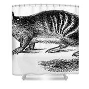 Numbat Shower Curtain