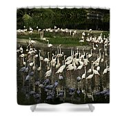 Number Of Flamingoes Inside The Jurong Bird Park In Singapore Shower Curtain