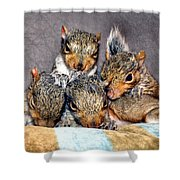 Nut Brothers Shower Curtain