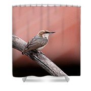 Nuthatch - Bird - Barn Roof Shower Curtain